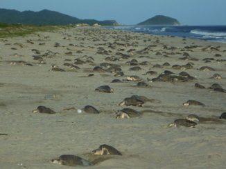rep-oax-tortugas